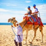 Things to do in San Jose del Cabo Los Cabos Mexico