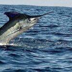 Todos Santos Fishing Charters in Baja California Sur Mexico