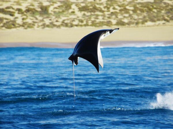 Los Cabos Natural Attractions