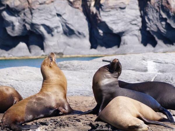 Los Cabos Sea Lions