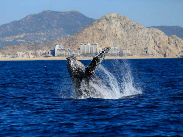 Los Cabos Things to do and What to do and see