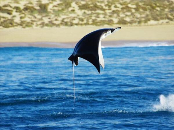Best Los Cabos Attractions